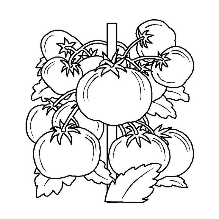 109 best images about coloriage du potager on pinterest - Dessin de potager ...