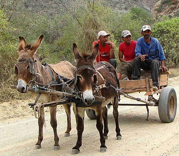 south african donkey cart - Google Search