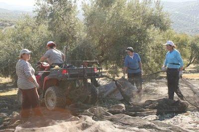 La ley sigue sin visibilizar el trabajo de las mujeres rurales cinco años después.  Entre los problemas a los que se enfrenta la norma figura la baja rentabilidad del sector, la mentalidad machista y el exceso de burocracia para registrarse. Ana Sola | El Diario, 2017-02-20 http://www.eldiario.es/andalucia/enclave_rural/agricultura_y_pesca/Mujer-rural-andaluz-titulo-masculino-Andalucia_0_613489381.html
