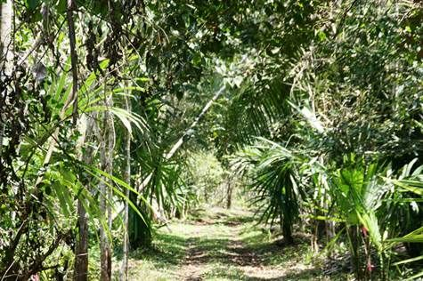 Lot or Land for Sale in Spanish Lookout, Cayo $35,000