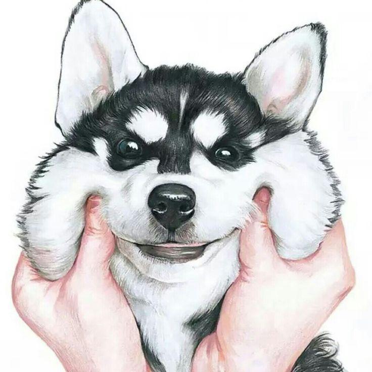 Good Pinterest Chubby Adorable Dog - 45355e427901b24be1552ca4d01c6484--walpaper-iphone-tumblr-wallpaper  Snapshot_812997  .jpg