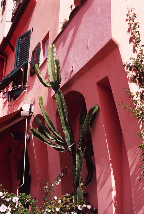 Pink and Green Camogli, Italy  September 2015 Lauren Bamford