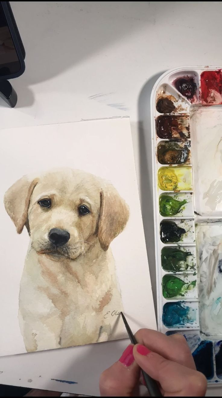 Yellow Lab Puppy Watercolor time lapse