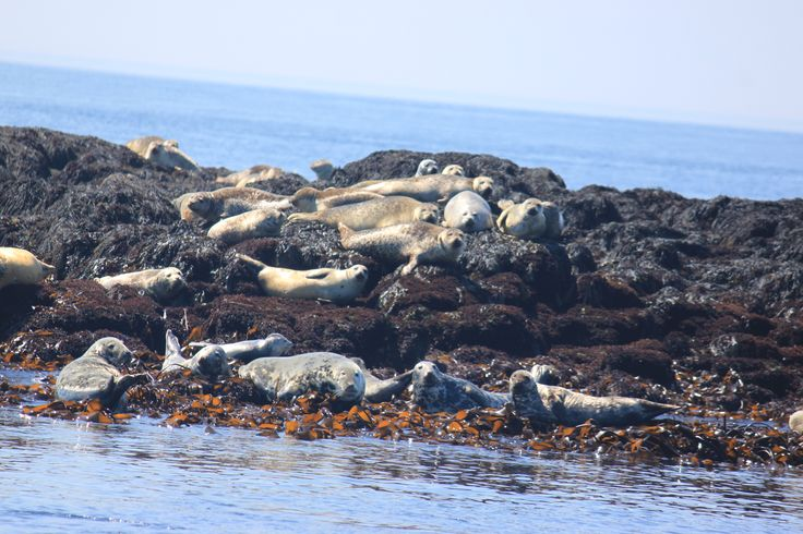 Seal party!