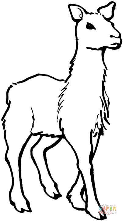 Llama coloring page from Llama category. Select from 28448 printable ...