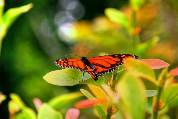 Monarch Butterfly Park In And San Diego On Pinterest