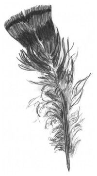 Wild Turkey Feather Drawing contemporary artwork