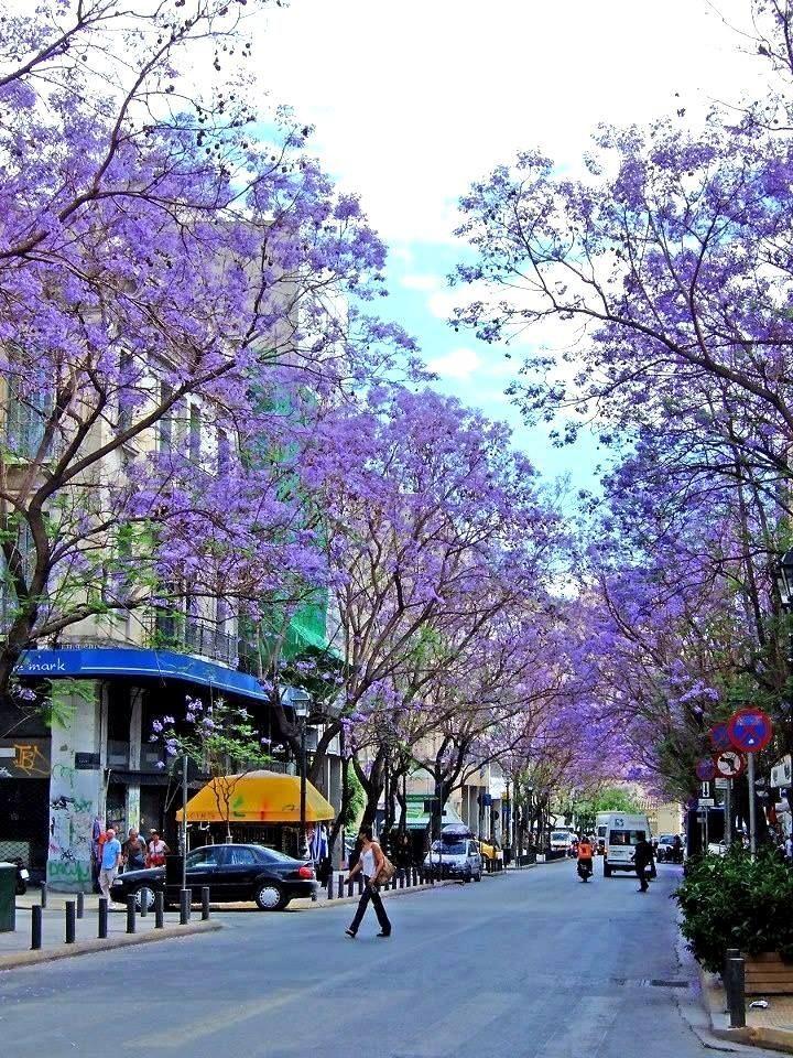 Every May/June, the Jacaranda trees turn Athens purple! Athinas Street, Monastiraki, Athens
