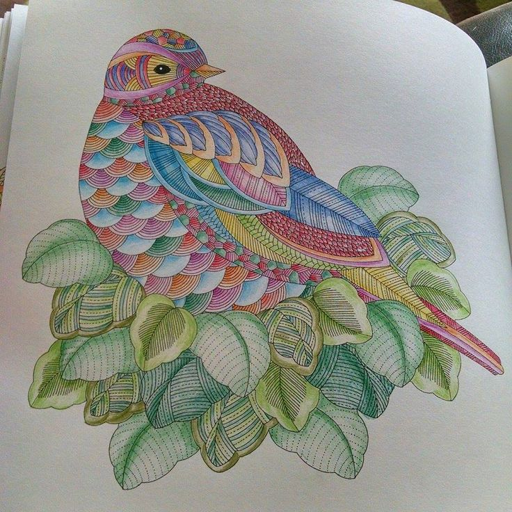 The 432 Best Millie Morotta Coloring Book Ideas Images On Pinterest