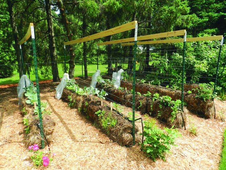 Straw bale gardening can increase your yield Urban GardeningContainer GardeningDesert
