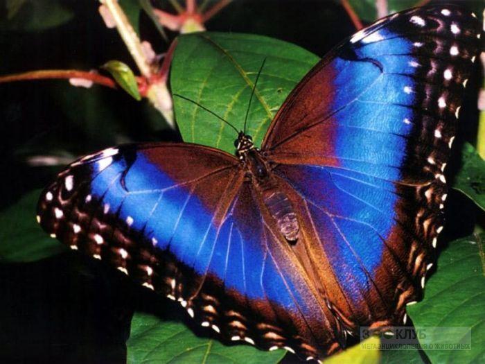 богемные бабочки фото: 21 тыс изображений найдено в Яндекс.Картинках