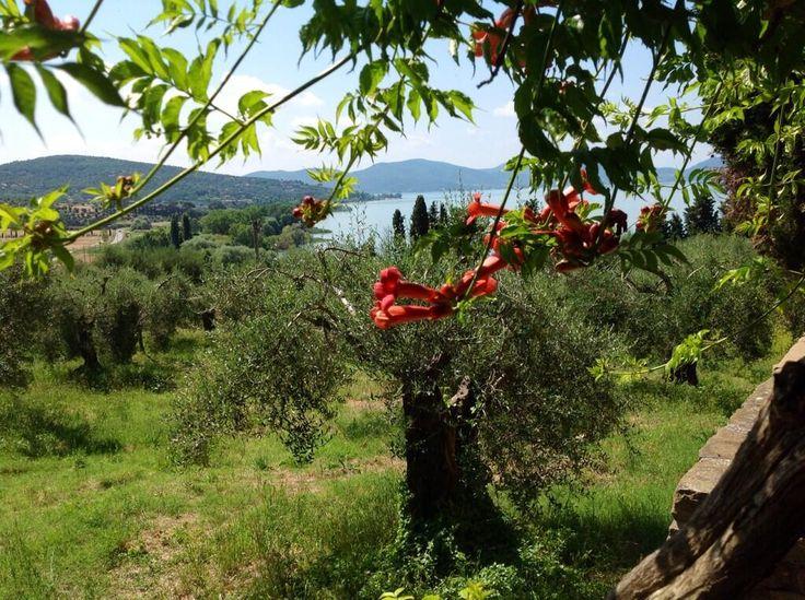 #Magione, MontedelLago Villa Aganoor Pompili: il posto delle corrispondenze. L'armonia si fa paesaggio #alTrasimeno foto di @marcostancati