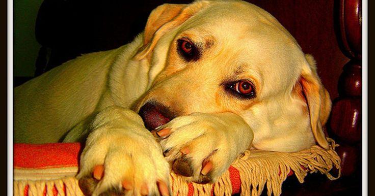 Que remédios gratuitos para dor podem ser dados para cachorros?. A maioria dos remédios gratuitos feitos para seres humanos são venenosos para cães. O único que mostrou ajudar cachorros foi a aspirina (ácido acetilsalicílico). Um veterinário deve ser contatado antes de dar aspirina a um cão.
