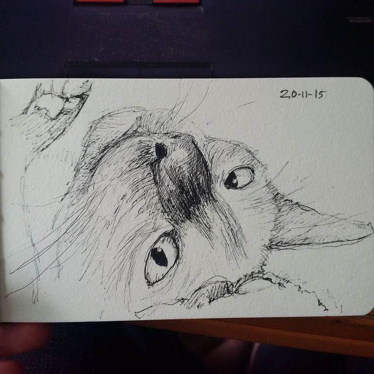 Momo the #cat  #catlover #catoftheday #catstagram #catsofinstagram #petart #petsofinstagram #drawing #twitter #portrait
