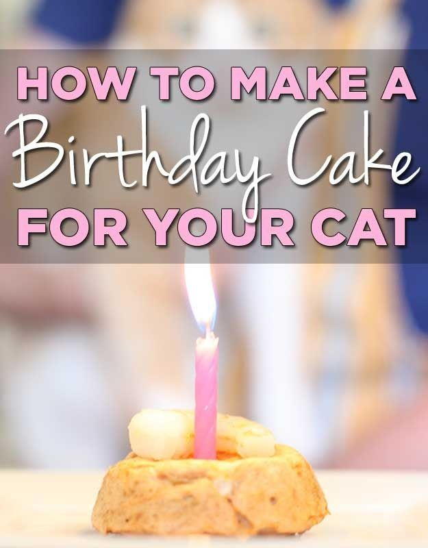 How To Make A Birthday Cake For Your Cat. AKA how to cross that line into full crazy cat lady status.