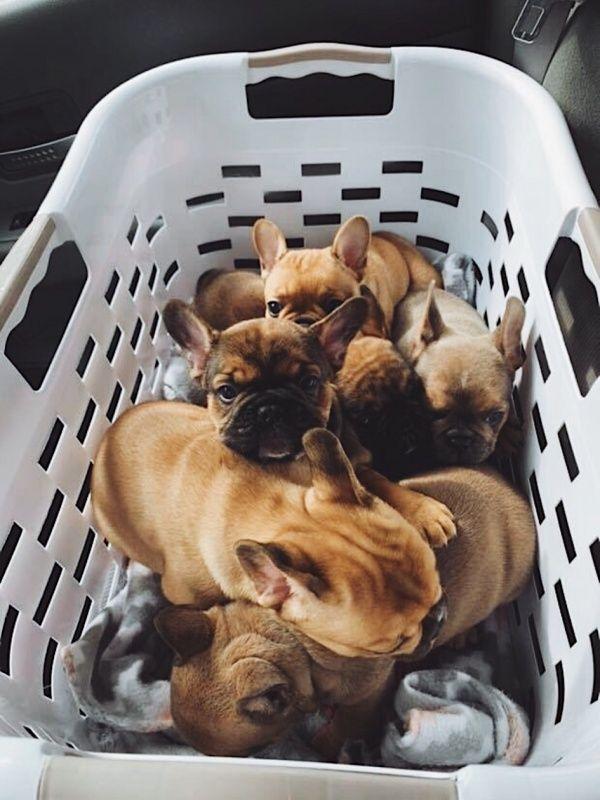 Vsco Kennnmccc Pureluxuriess Puppies Cute Animals Puppy Care