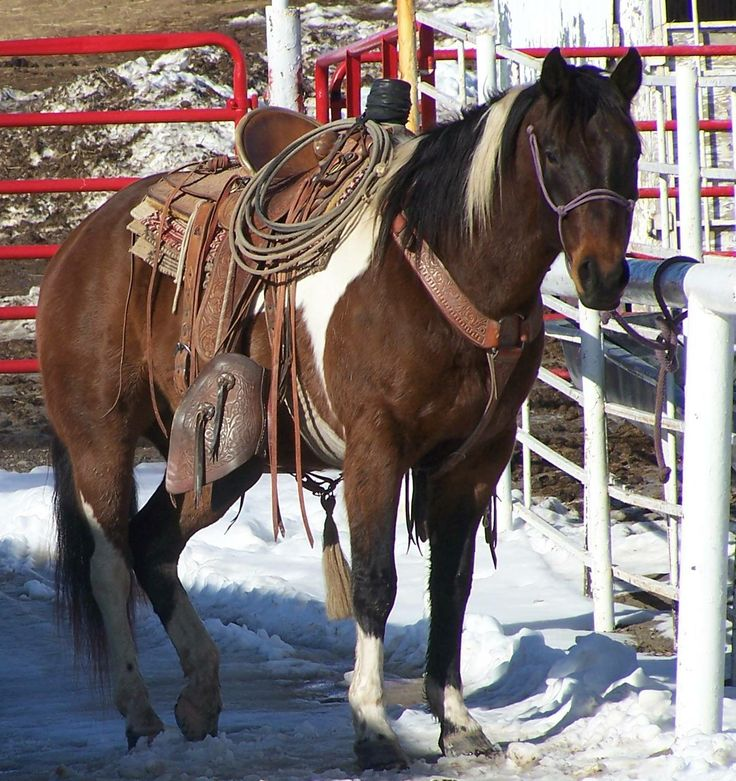 Ranch Horse - Finished Header - Trail Horse for Sale - For more information click on image or see ad # 30831 on www.RanchWorldAds.com