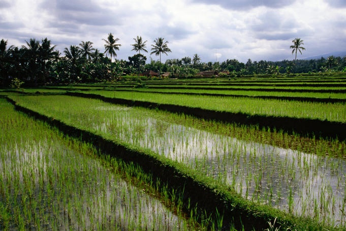 Tetebatu, East Lombok - a village haven amongst the rice paddies.