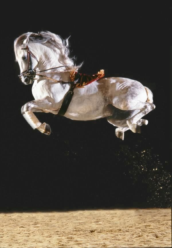 """""""Must go see...can your horse do this?"""" Pft, if he could, I wouldn't be going to public school."""