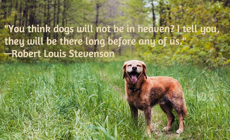 """""""You think dogs will not be in heaven? I tell you, they will be there long before any of us."""" - Robert Louis Stevenson"""