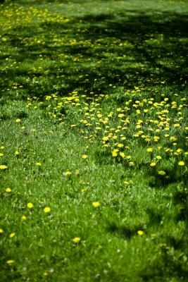 How to Fix a Lawn That Is Overrun With Weeds and Crab Grass  http://surreylawns.co.uk