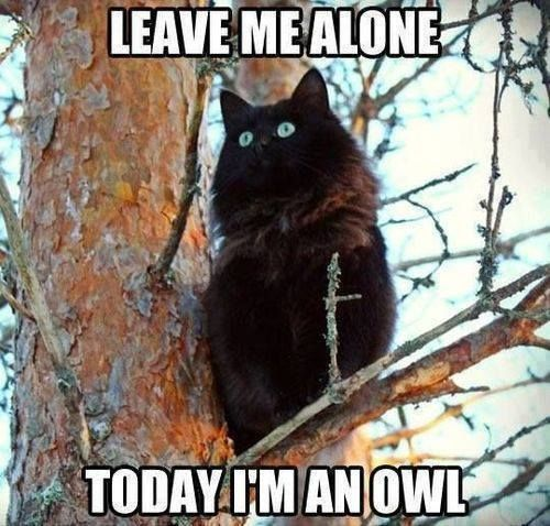 Leave me alone too. Today I'm an owl. - There. That completely sums it up. Completely. This is the most inspiring thing I've seen in weeks. WEEKS.