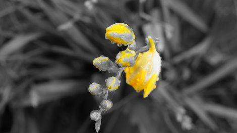 Ana Lu, yellow rain  on ArtStack #ana-lu #art