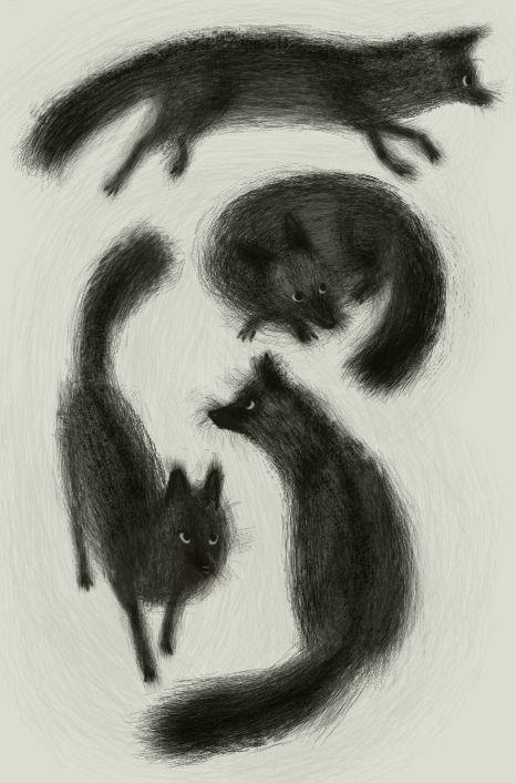 Black Foxes, by Meg Park.