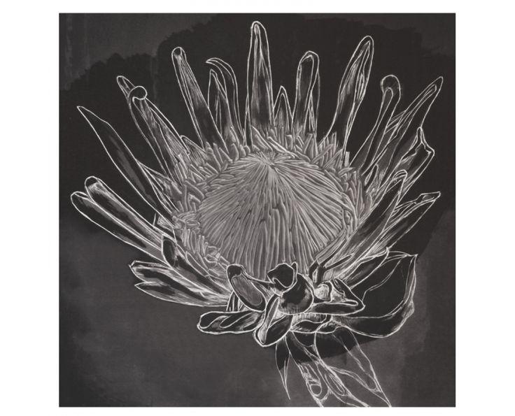 Black Protea Wall Art - Homeware   Weylandts South Africa