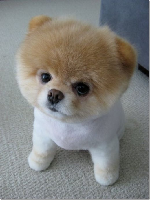 Only if it looks just like this teddy bear!!!