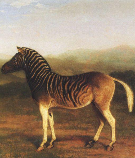 16 Fascinating Extinct Animals – Carolyn Rainwater