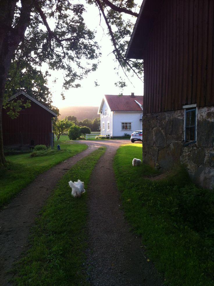 Sweden summer in Bollebygd