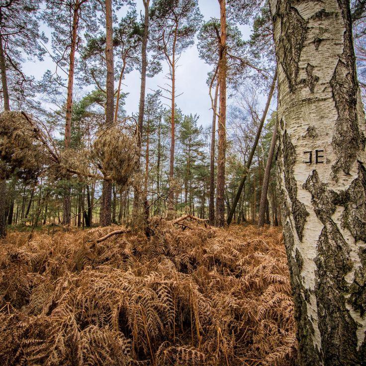 Bild 38 - Zadlitzbruch in der Dübener Heide bei Torgau | © Michael Eichhorn #zadlitzbruch #dübener_heide #naturschutzgebiet #sachsen #saxony #ausflugsziel #torf #moor #hochmoor #wandern #dübenerheide #duebenerheide #torgau #baddueben #baddüben #wald #sumpf #sumpfgebiet #natur #naturschutz #reservat #biosphäre #biosphere #farn #naturpark #falkenberg #trossin #dresden #nordsachsen #leipzig #sehenswürdigkeit #ziel #sonnentau #sumpfdotterblume #kranich
