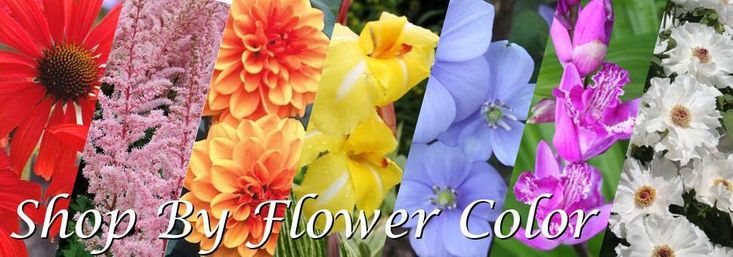 """Image of several different flowers of different colors with the text """"Shop by flower color"""" superimposed"""