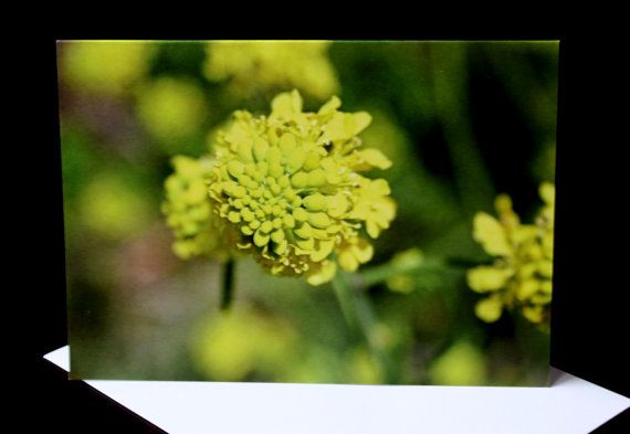 Yellow Flower Photo Greeting Card  A6 Blank Notecard by PforPoppy, €2.75