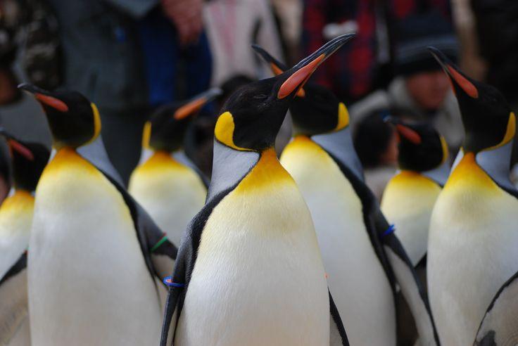 南極にいるみたい!ペンギンの種類数日本一の「長崎ペンギン水族館」でそのかわいさに癒される - Find Travel