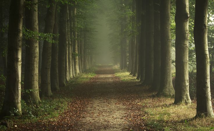 forest 7 jpg 5184Ã 3192 forest pinterest forests and search