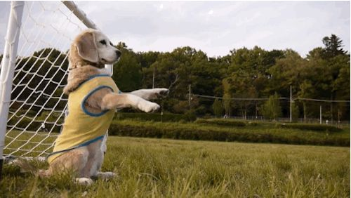 These Dogs Are Not Just Cute But Plays Soccer Better Than You