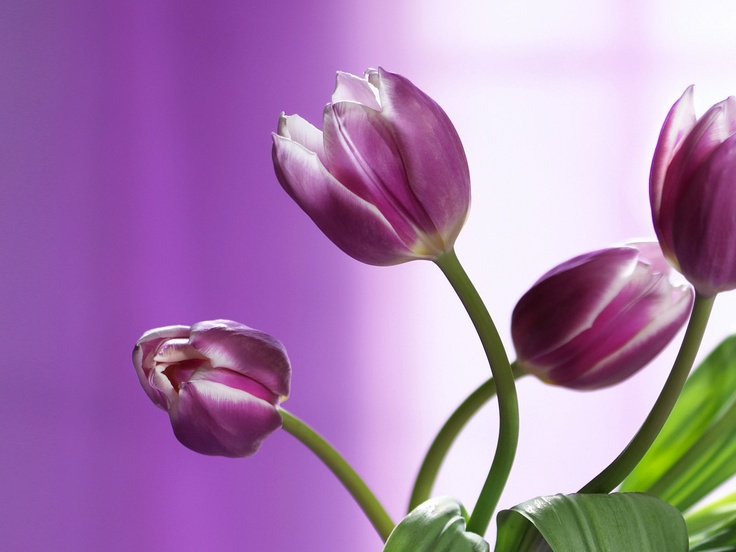Great flowers :)