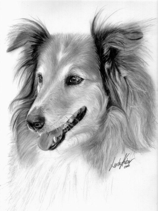 Собаки картинки карандашом