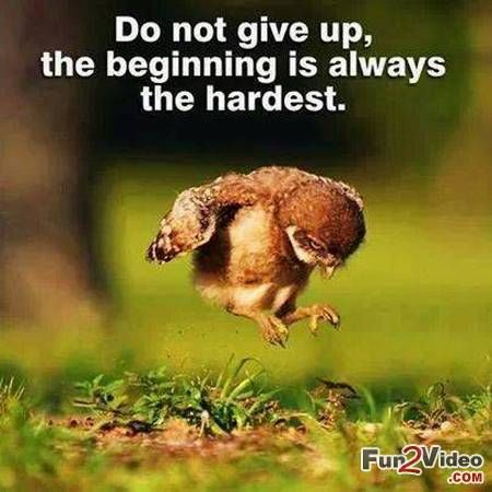 never give up funny | Never give up quotes inspirational ...