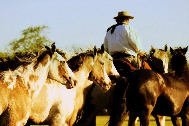 Tropillas de caballos criollos  by Eduardo Amorim -