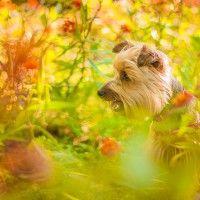 #dogalize Cura del cane con le erbe: rimedi naturali efficaci #dogs #cats #pets