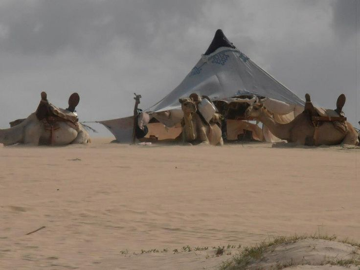 Camels and a TeePee on the beach, Cape Verde Islands