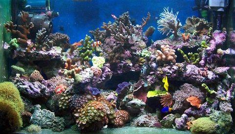 aquarium2.jpg 480×274 Pixel