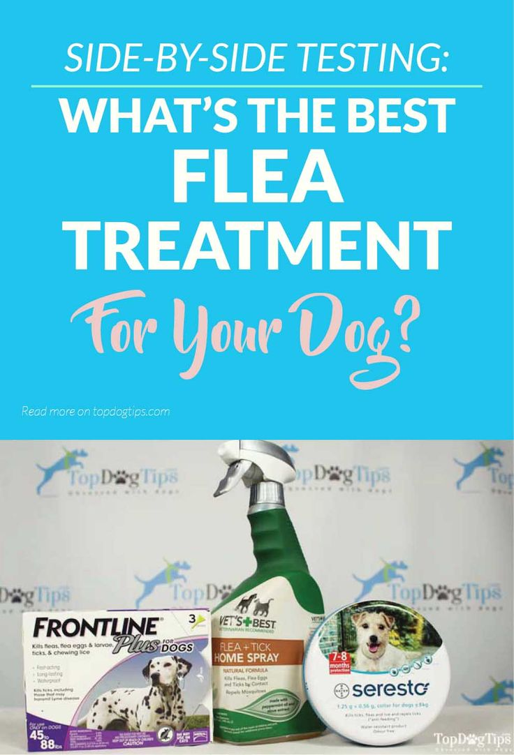 3 Best Flea and Tick Treatment for Dogs Review & Comparison (2017) Frontline vs. Seresto vs. Vet's Best. Fleas don't just cause itchy dogs and annoyed owners, they can also carry diseases and cause some serious health issues. Fleas also infect your dog with tapeworms, which are another parasite that can cause a lot of problems. That's why every pet owner needs to have the best flea and tick treatment for dogs on hand at all times. #dog #fleas #ticks #treatment #reviews #best #dogs #pets