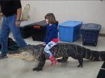What could possibly go wrong? Shocking video of a young child riding an 8ft ALLIGATOR at a birthday party   Daily Mail Online
