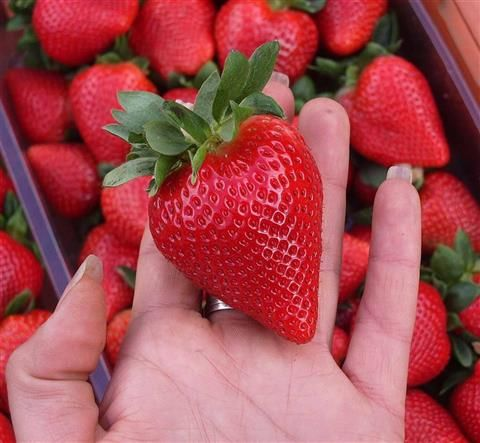 strawberry picking - do on our 2 day spa trip
