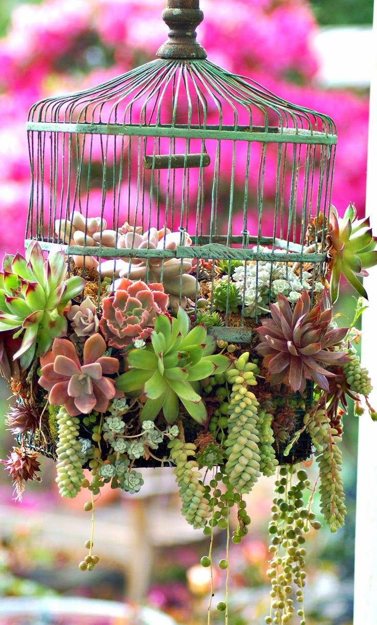Birdcage of succulents