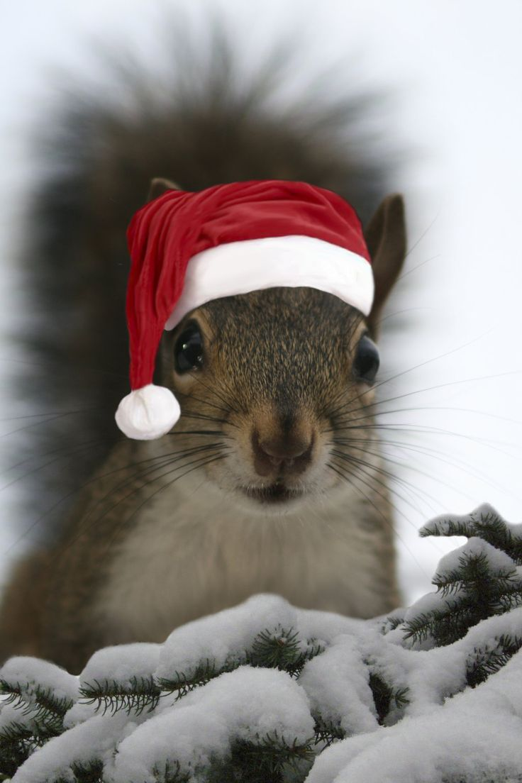 Only A Few Squirrels Like Bubba Would Hold Still Long Enough To Let A Human Put A Santa Hat On